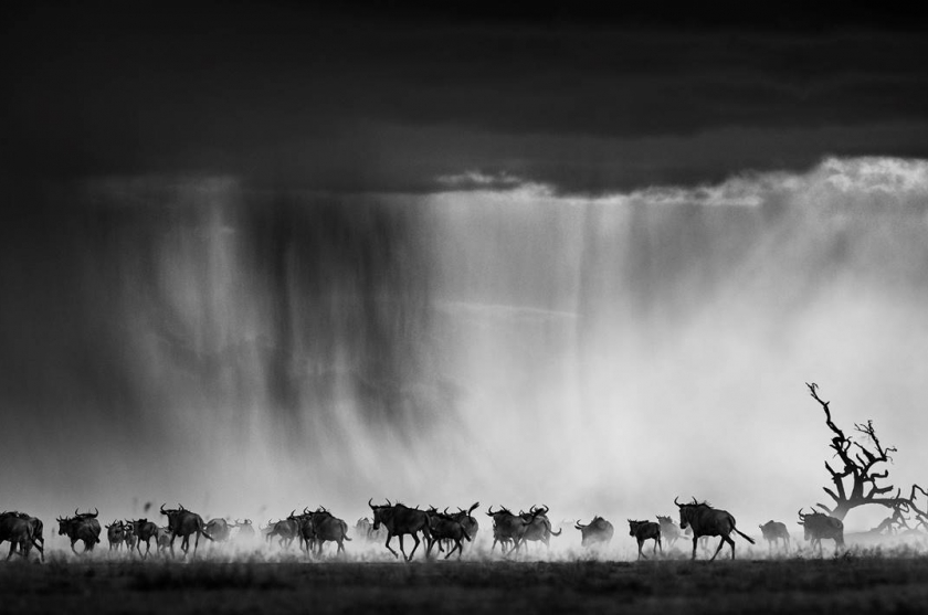 "David Yarrow - ""Exodus"""