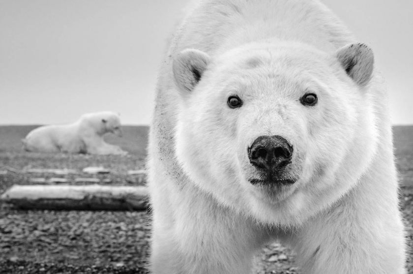 "David Yarrow - ""Hello"""