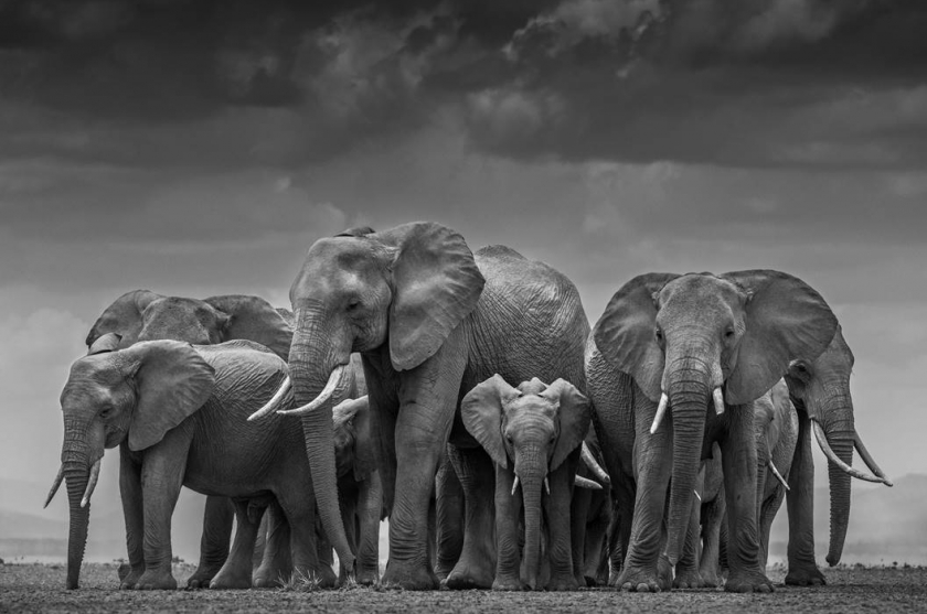 "David Yarrow - ""The Circle Of Life"""