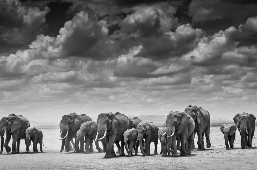 "David Yarrow - ""The Crossing"""