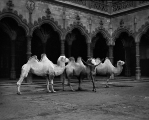 "Marc Lagrange - ""The Herder"""