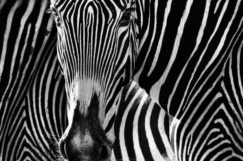 "David Yarrow - ""The Puzzle"""