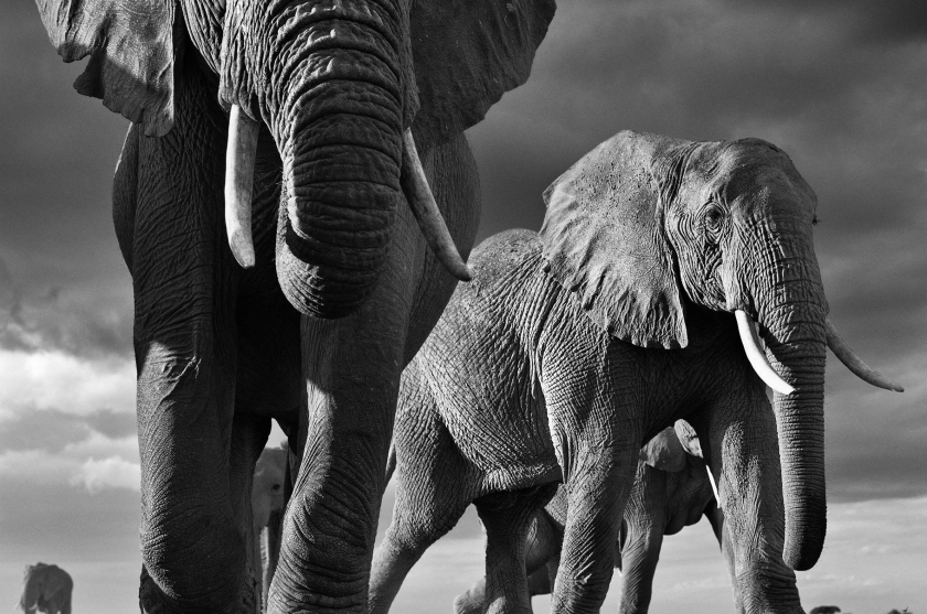"David Yarrow - ""Big"" at Leonhard's Gallery"