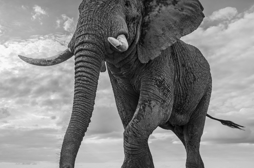 "David Yarrow - ""Giant's Kingdom"""