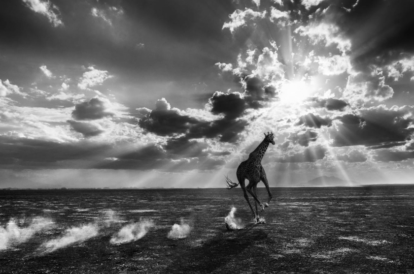 "David Yarrow - ""Heaven Can Wait"""