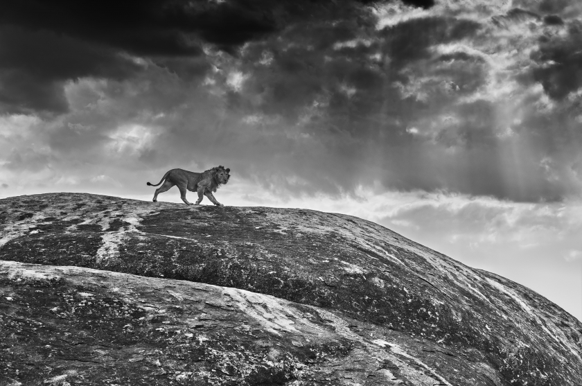 "David Yarrow - ""Rock Star"""