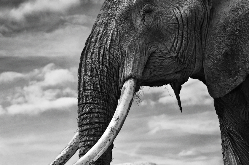 "David Yarrow - ""Snow Patrol"""