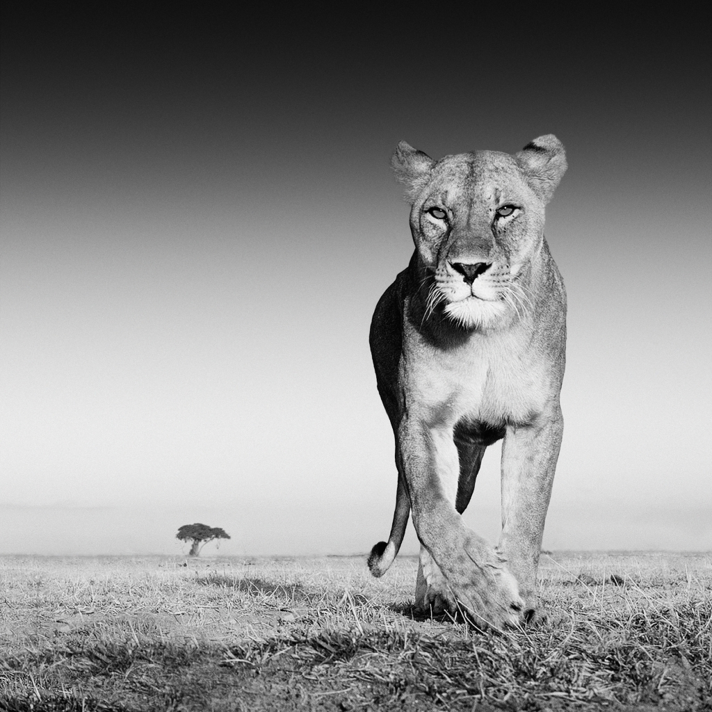 "David Yarrow - ""The Prize"""