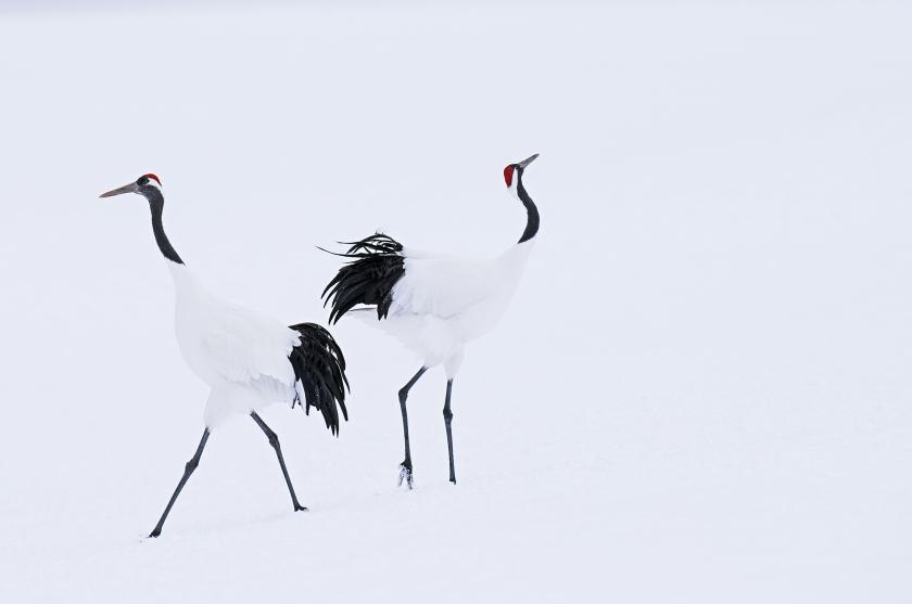 Hokkaido - David Yarrow 2017 - Leonhard's Gallery