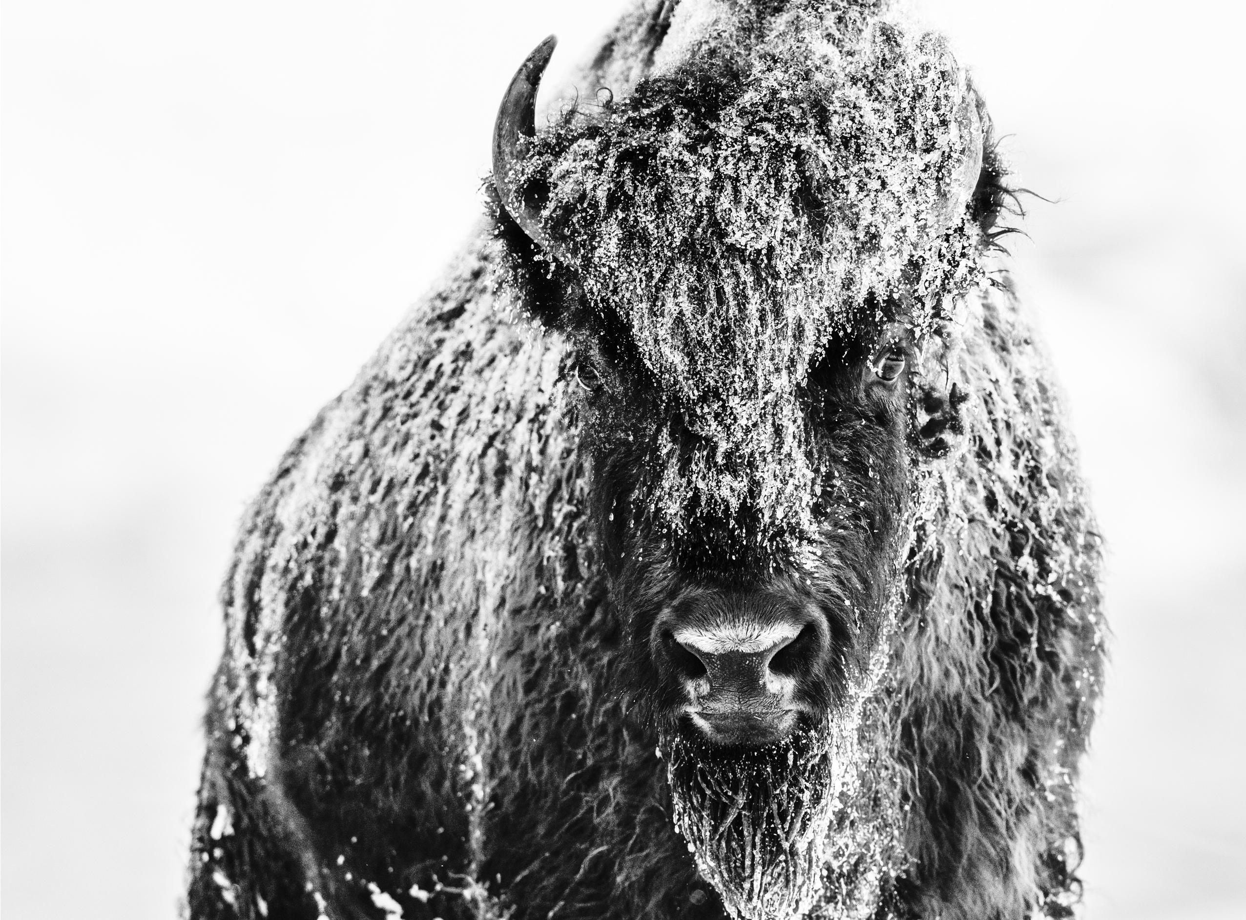David Yarrow - The Beast