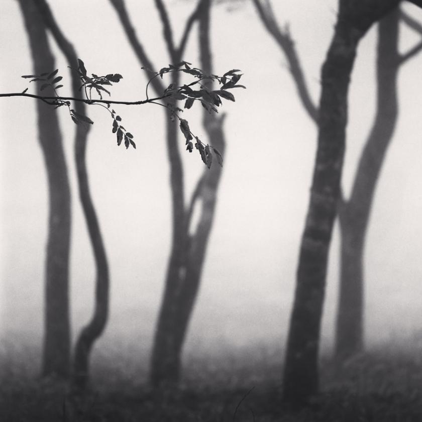Chikui-Cape-Trees,-Muroran,-Hokkaido,-Japan.-2002