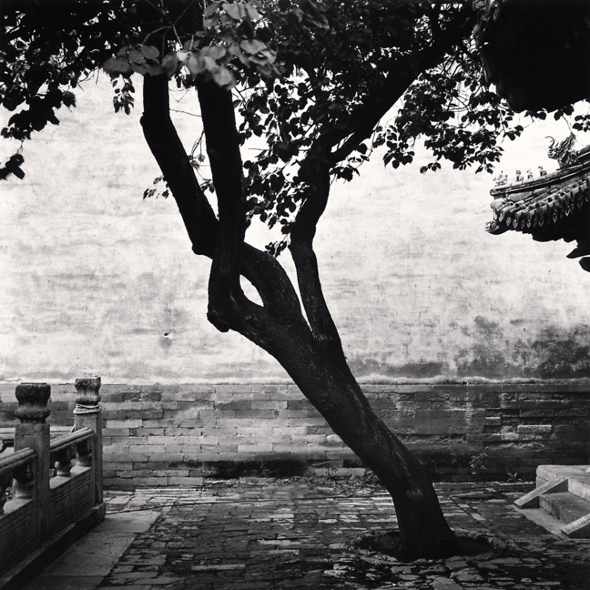 Forbidden-City-Tree,-Study-2,-Beijing,-China.-2011
