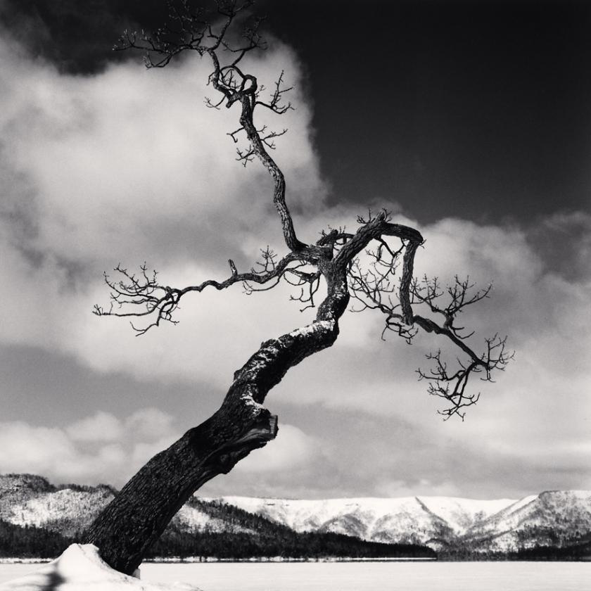 Kussharo-Lake-Tree,-Study-11,-Kotan,-Hokkaido,-Japan.-2004