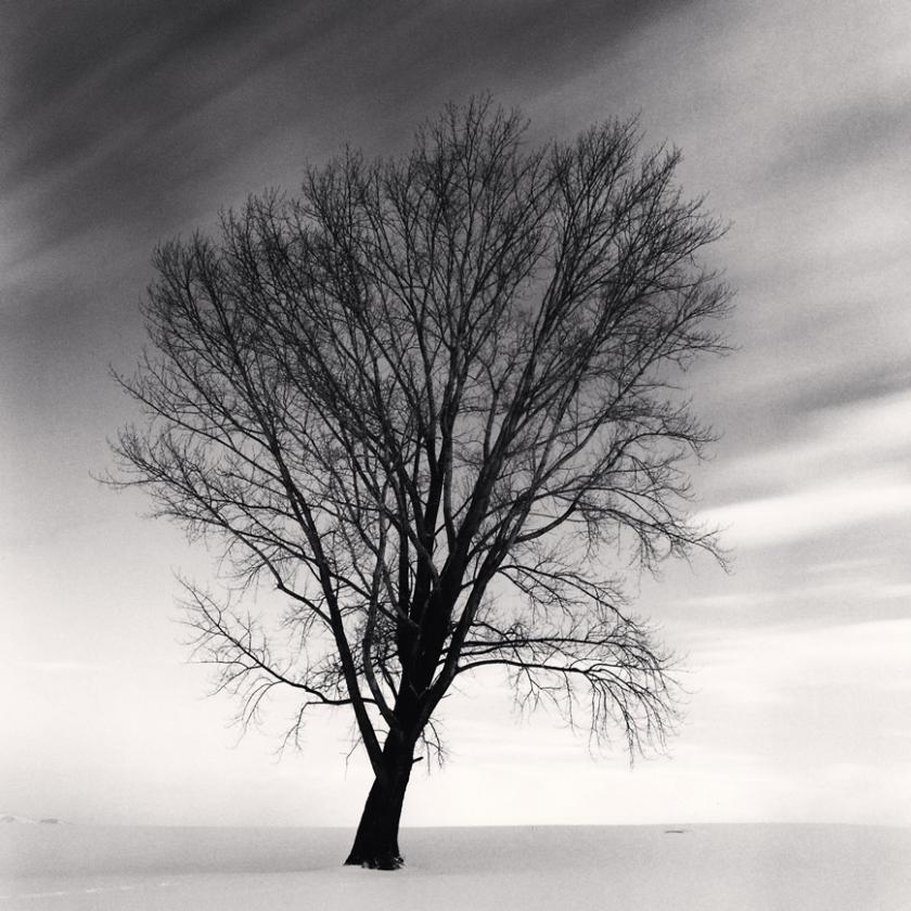 Philosopher's-Tree,-Study-2,-Biei,-Hokkaido,-Japan.-2009