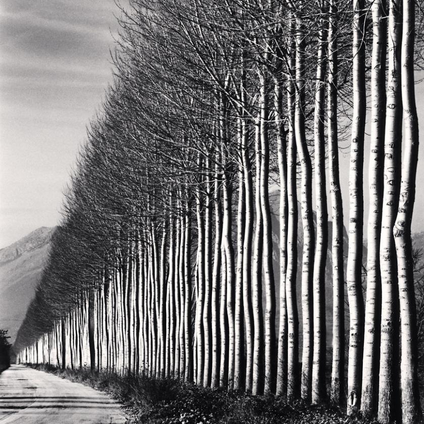 Poplar-Trees,-Fucino,-Abruzzo,-Italy.-2016