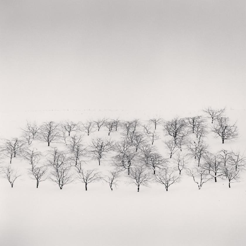 Sixty-Trees,-Nakafurano,-Hokkaido,-Japan.-2004