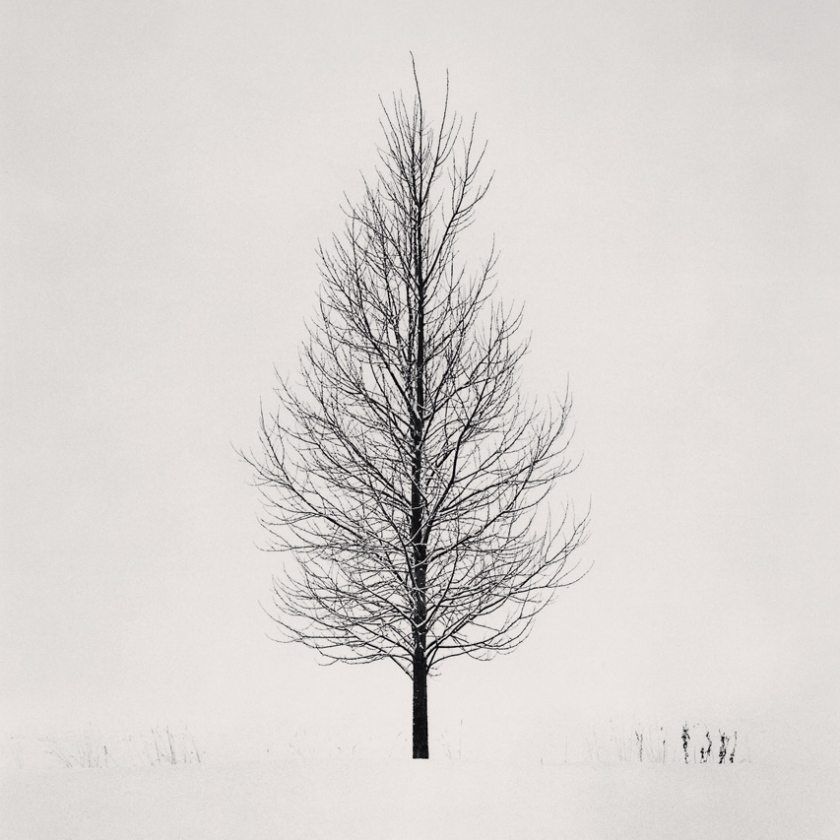 Tree-Portrait,-Study-5,-Wakoto,-Hokkaido,-Japan.-2005