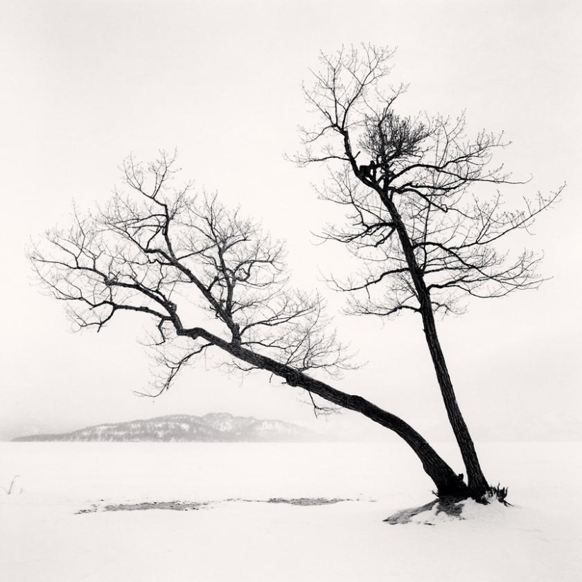 Two-Leaning-Trees,-Kussharo-Lake,-Hokkaido,-Japan.-2013