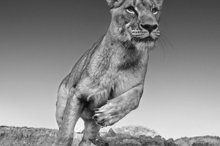 EMMA - David Yarrow - Leonhard's Gallery