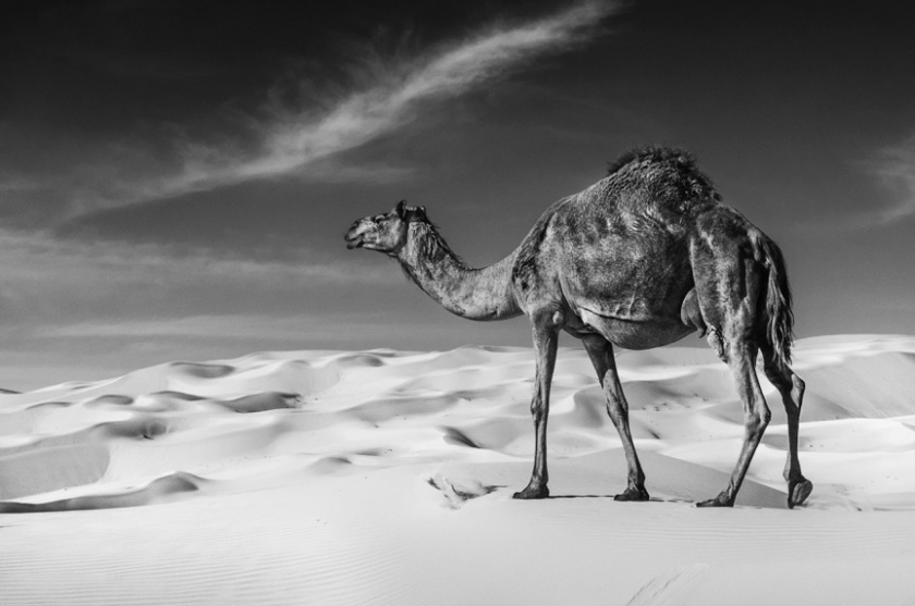 Star Wars - David Yarrow - Leonhard's Gallery