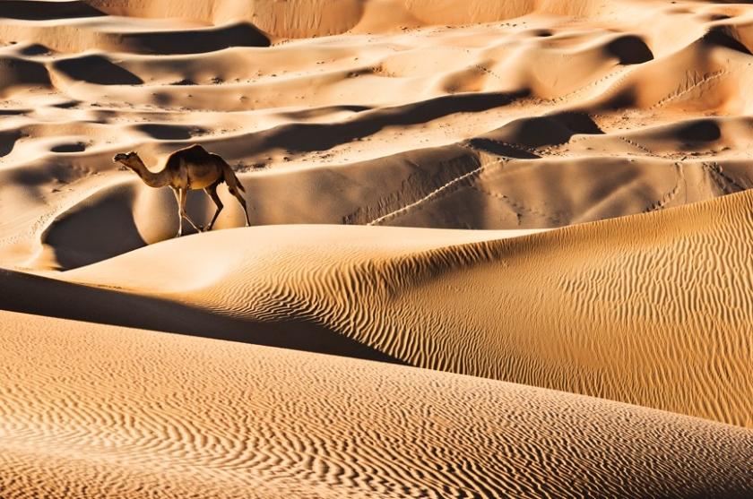 Camel Light - David Yarrow - Leonhard's Gallery