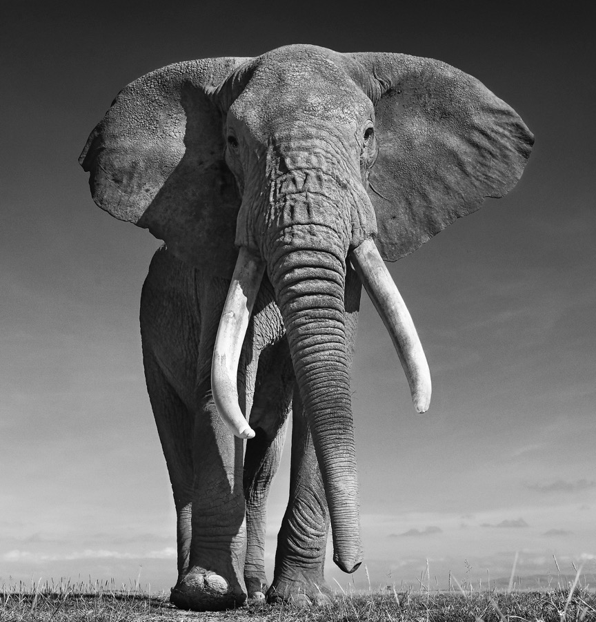 THE DON - David Yarrow - Leonhard's Gallery