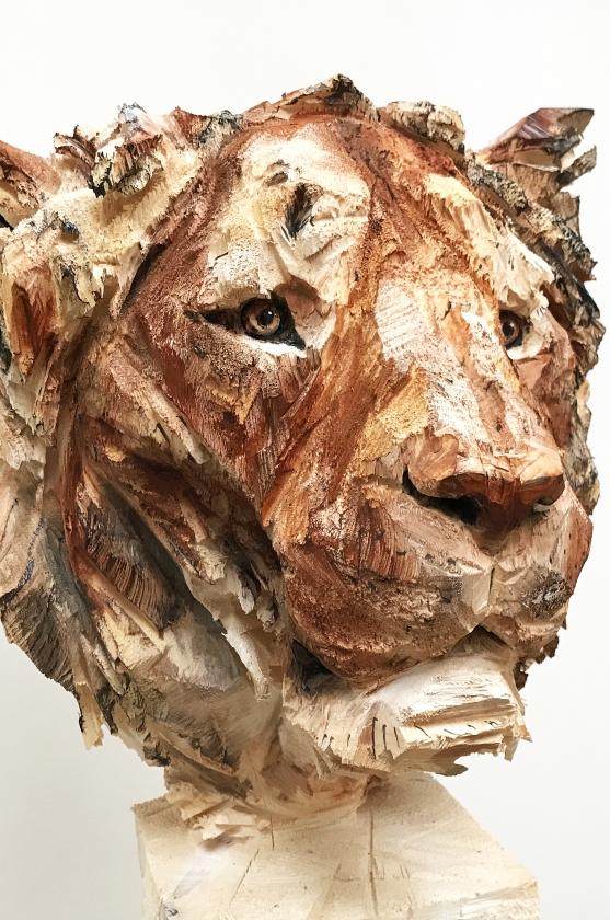 Lion Adolescent detail - 25.05.17 - 154 x 54 x 53 cm