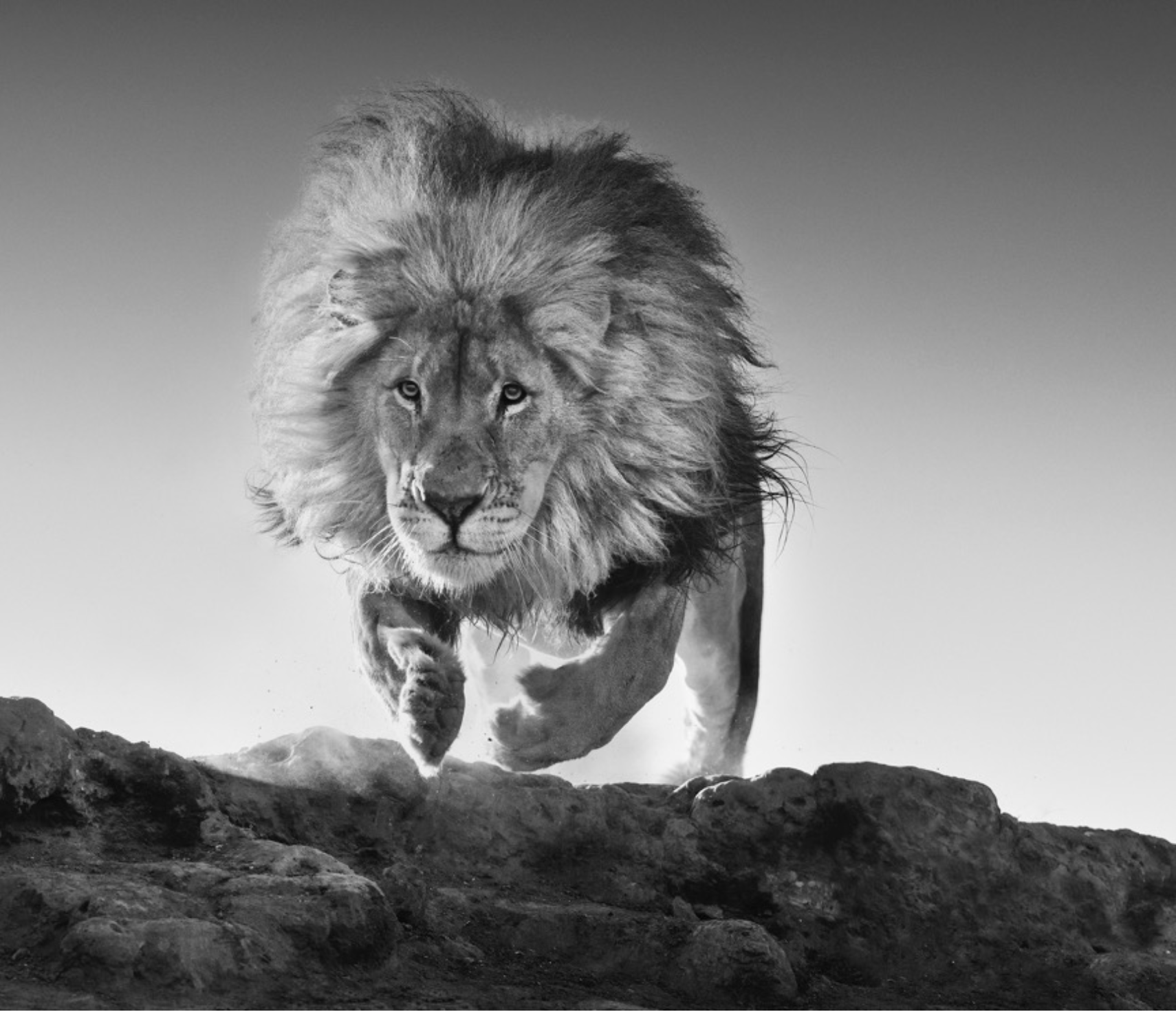 Hairspray - David Yarrow - Leonhard's Gallery