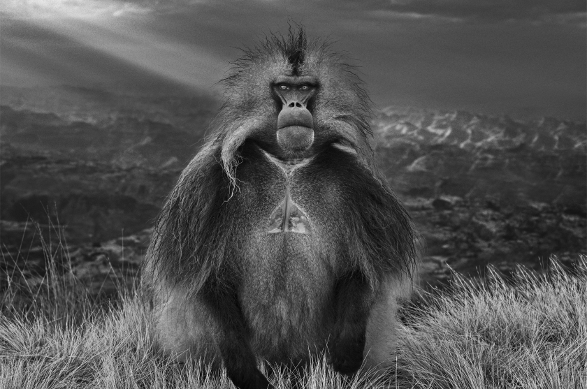 Members Only - David Yarrow - Leonhard's Gallery