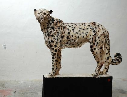 The cheetah, front - Jürgen Lingl-Rebetez - Leonhard's Gallery