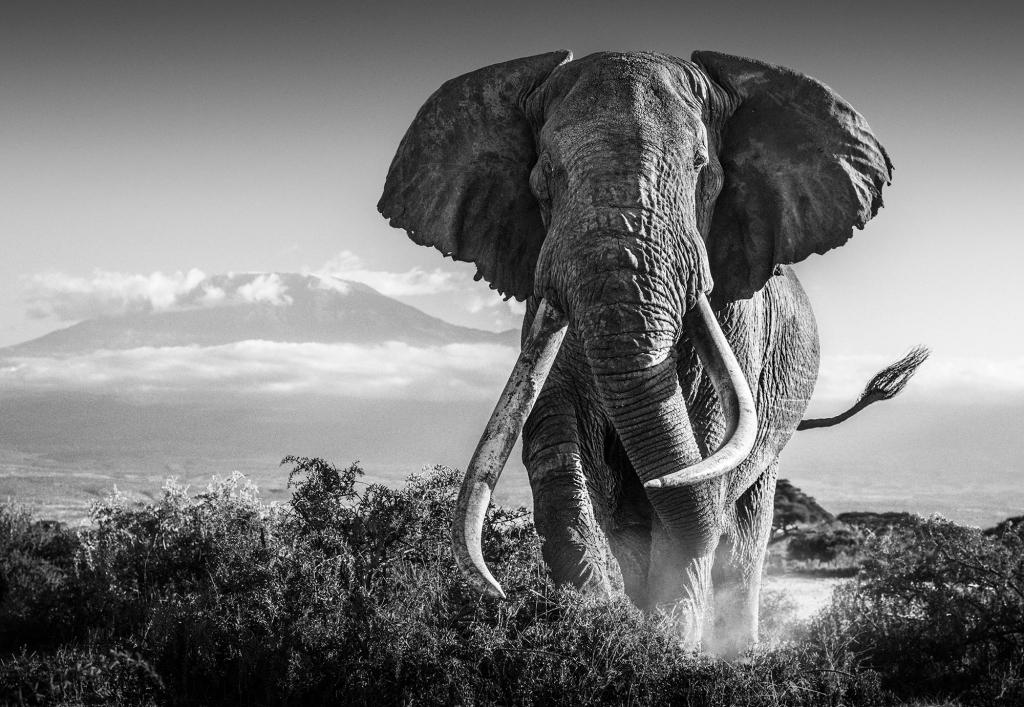 Africa - David Yarrow - Leonhard's Gallery