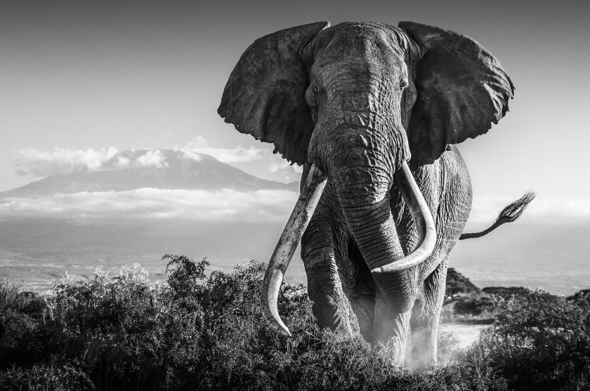 Africa - David Yarrow - Leonhard's Gallery