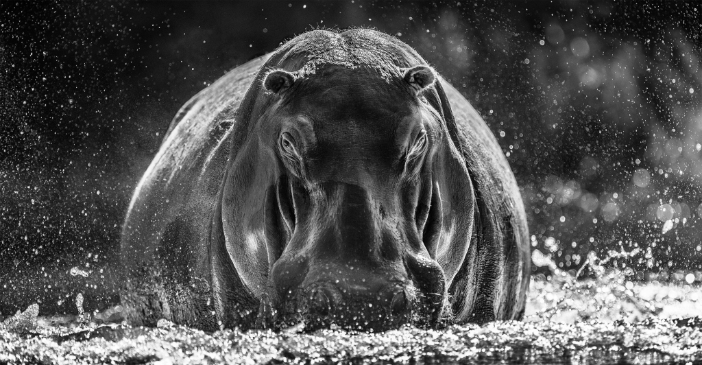 Dexter - David Yarrow - Leonhard's Gallery