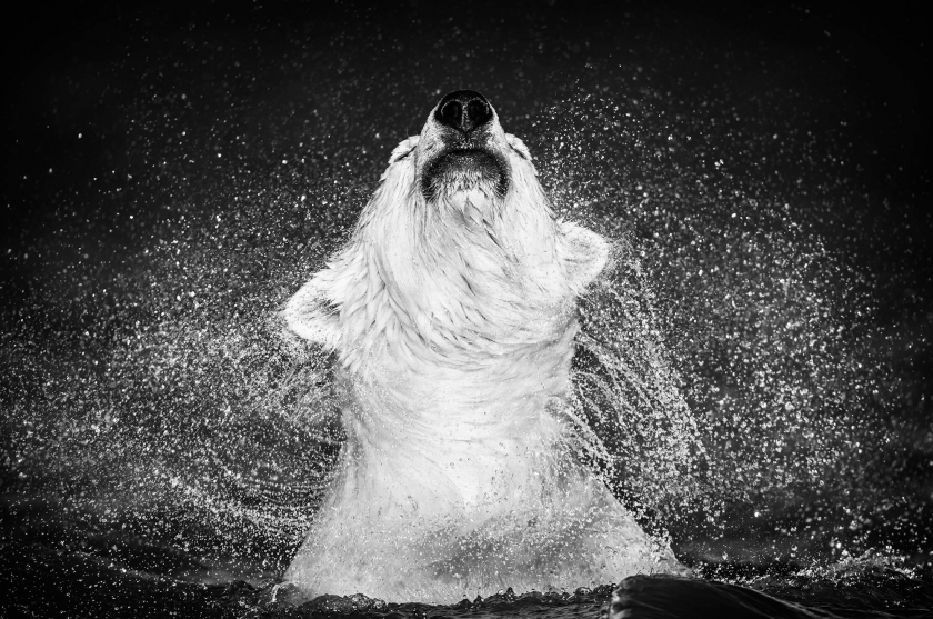 Diamond's In The Sky - David Yarrow - Leonhard's Gallery