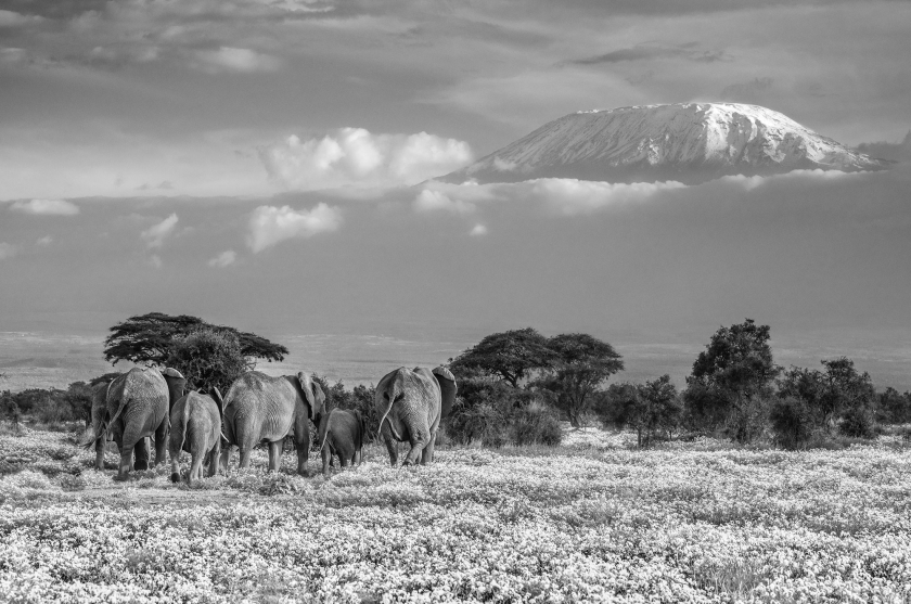 Garden Of Eden - David Yarrow - Leonhard's Gallery