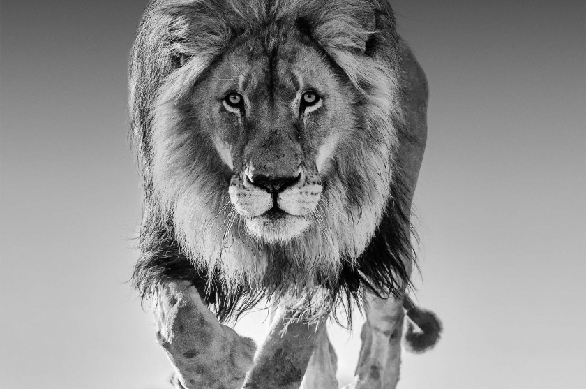 Genesis - David Yarrow - Leonhard's Gallery