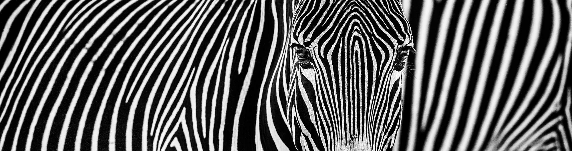 Parallel Lines - David Yarrow - Leonhard's Gallery