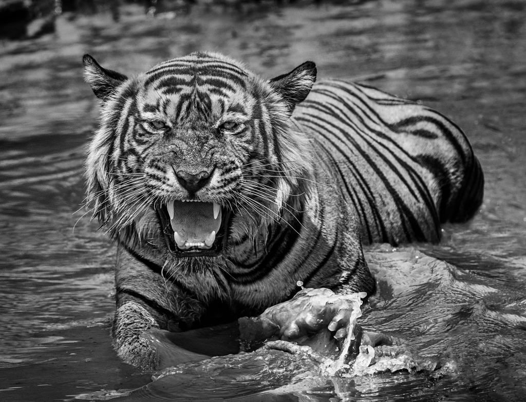 Risky Business - David Yarrow - Leonhard's Gallery