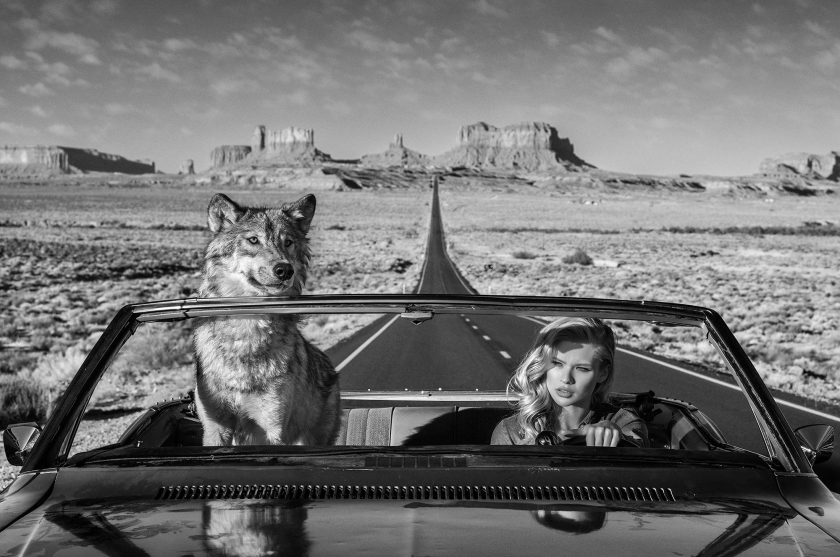 Road Trip - David Yarrow - Leonhard's Gallery