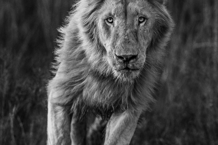 Thor - David Yarrow - Leonhard's Gallery