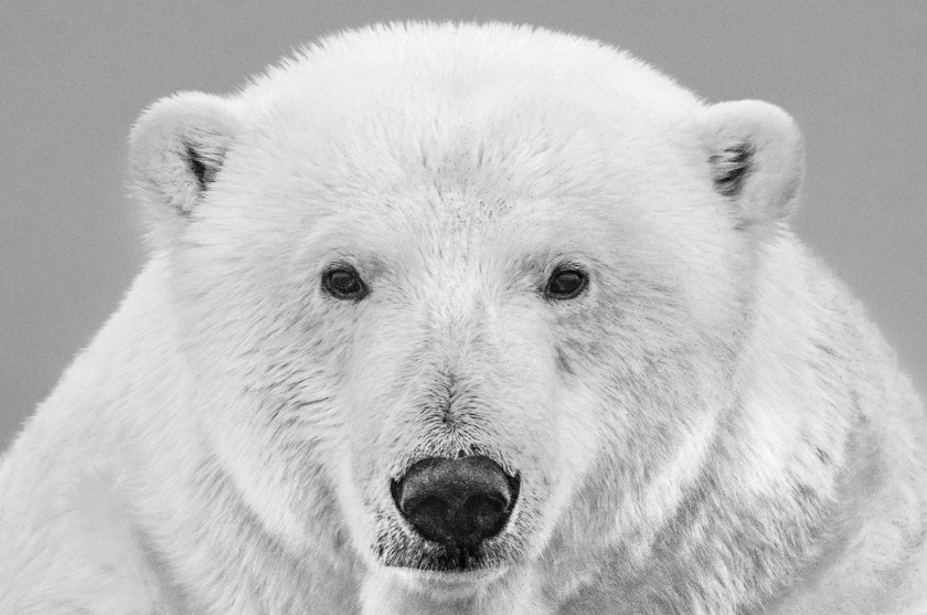 The Statesman - David Yarrow tumb - Leonhard's Gallery