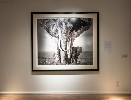 Vernissage David Yarrow - Leonhard's Gallery
