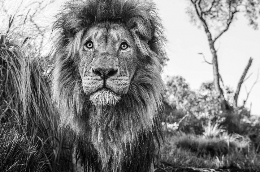 Kingdom - David Yarrow - Leonhard's Gallery
