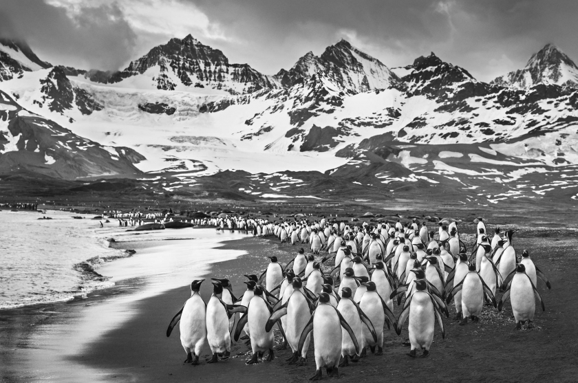 The Breakfast Club - David Yarrow - Leonhard's Gallery