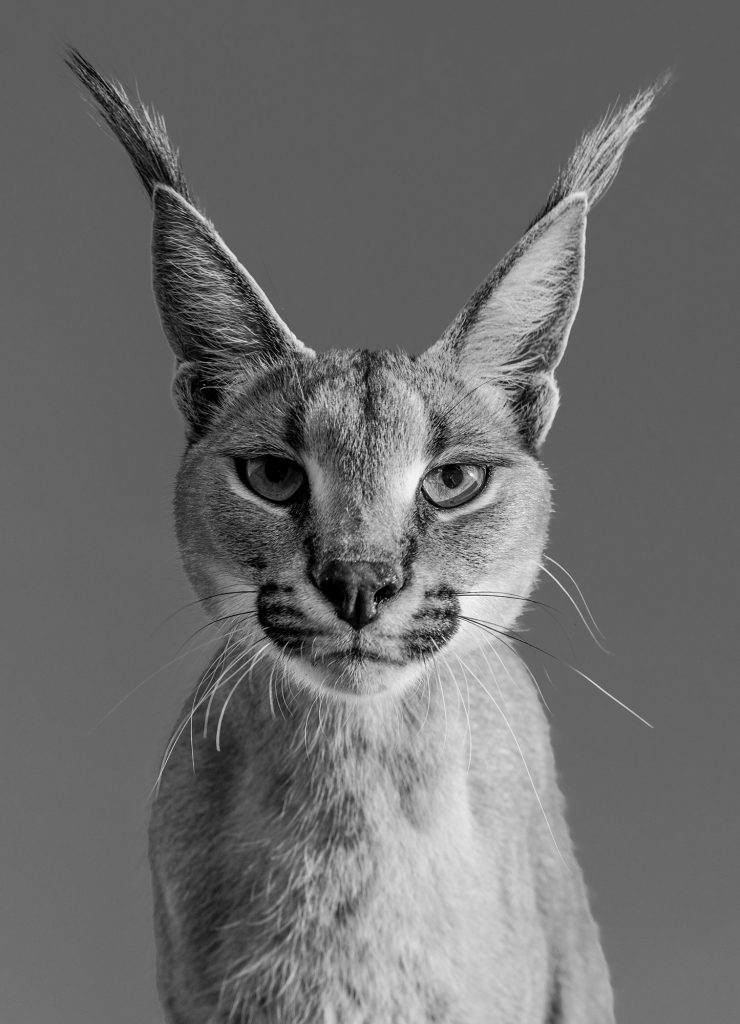 Harry Potter - David Yarrow - Leonhard's Gallery