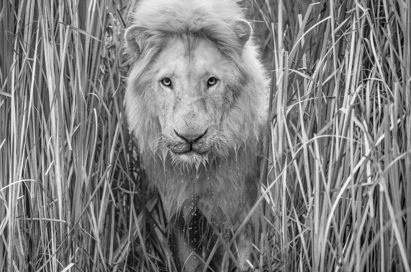 Narnia - David Yarrow - Leonhard's Gallery
