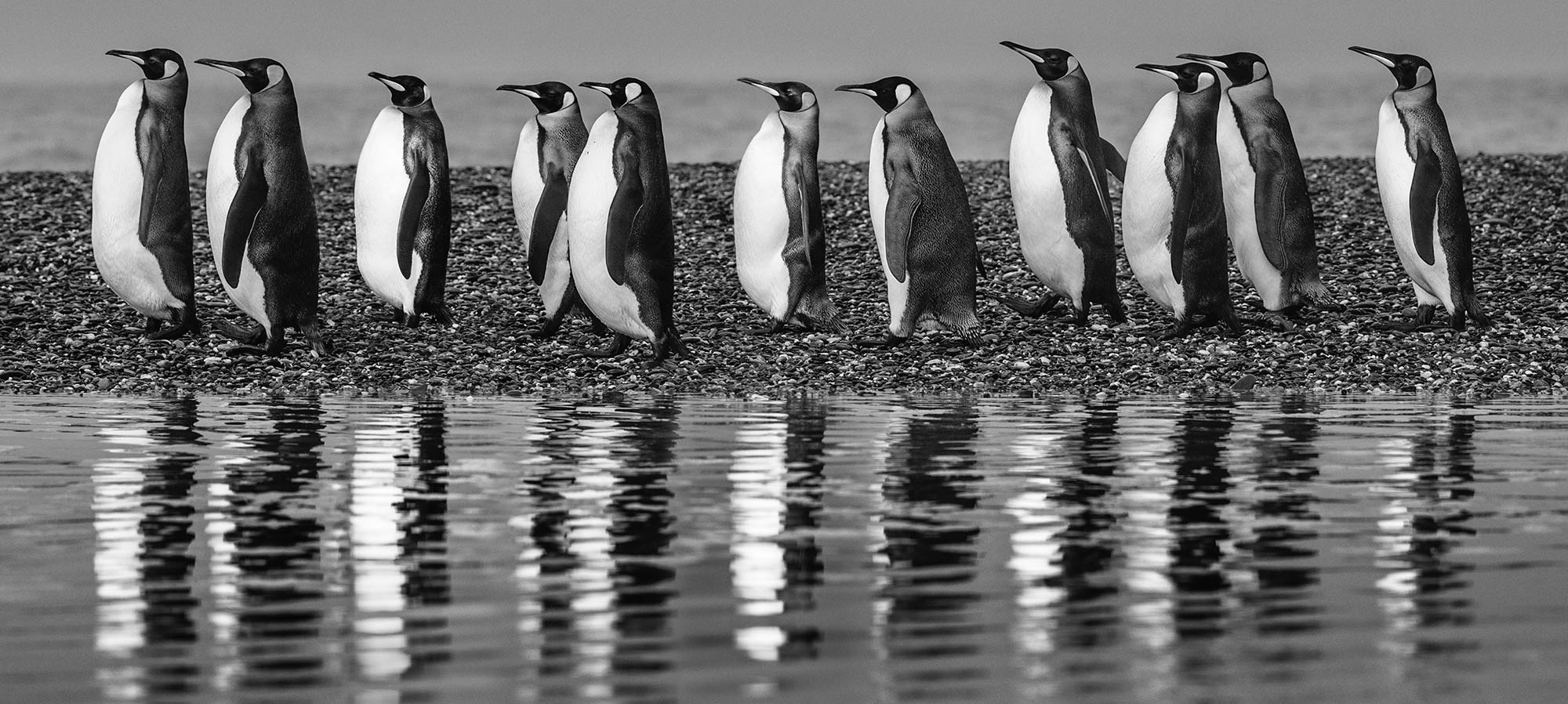David Yarrow - Oceans-11 - Leonhard's Gallery