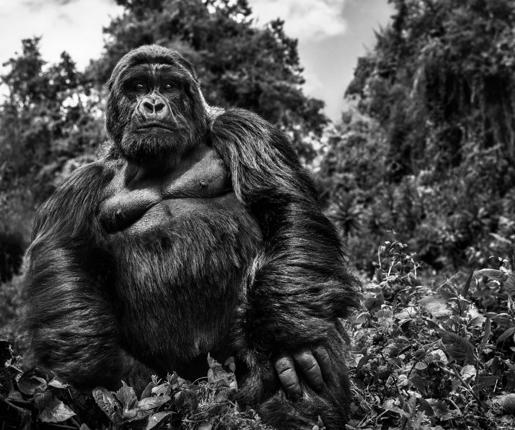 Judge And Jury - David Yarrow - Leonhard's Gallery