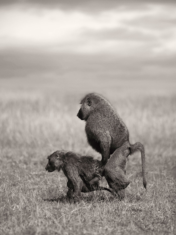 Monkey Business - Vincent Lagrange - Leonhard's Gallery