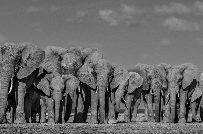Defense - David Yarrow - Leonhard's Gallery